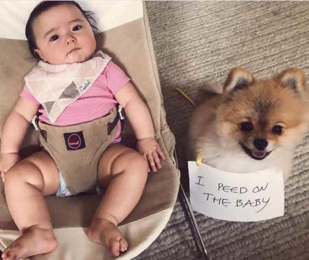 OMG! pooch pees on the baby!