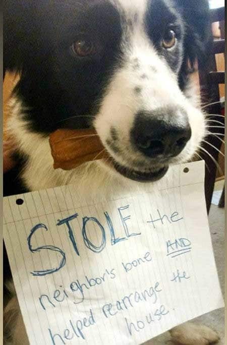 Dog is part of shamed dogs in trouble for stealing the neighbors bone