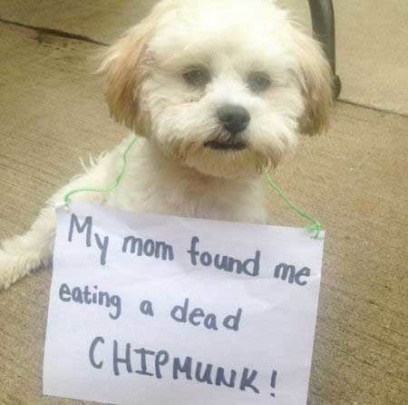 Little pooch is part of shamed dogs in trouble for eating a chipmunk