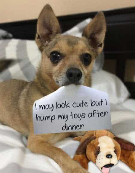 pooch likes to do the stuff animals