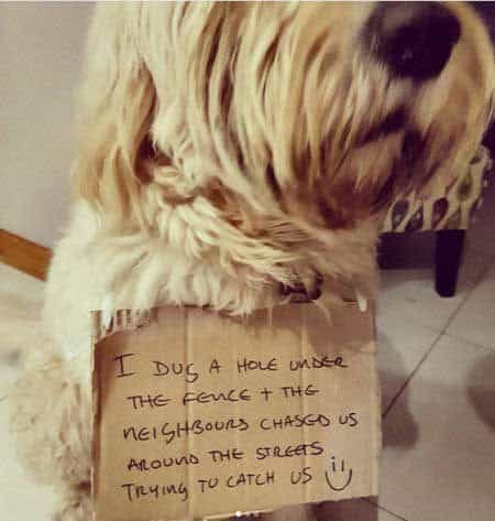 pooch escaped and the whole neighborhood had to chase him down in these funny dog shaming photos