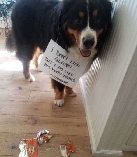 Big canine stole all the puppy treats
