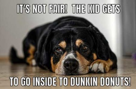 Jealous dog logic memes, it's not fair that the kid can go inside to dunkin donuts