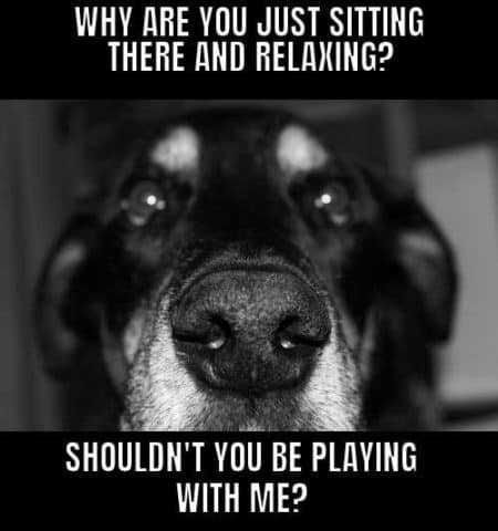 Dog Logic Memes, Why are you just sitting there and relaxing? Shouldn't you be playing with me?