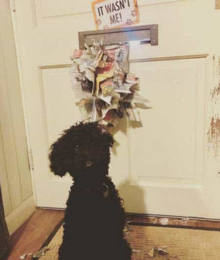 destructive dog pictures with a pooch standing in front of the mail he shredded near the mail slot