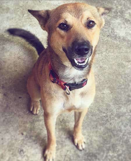 Smiling dog sitting down