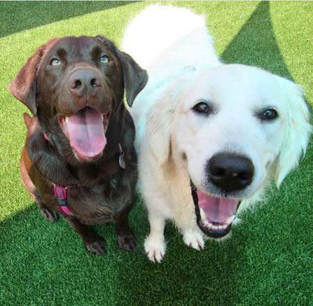 Two funny smiling dogs outside