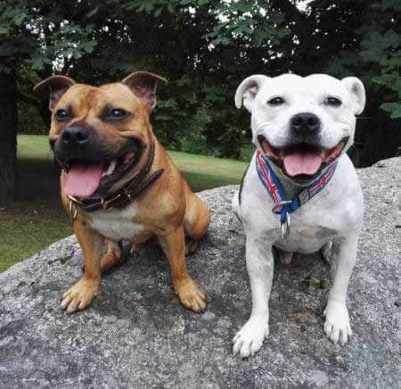 two smiling dogs sitting on a boulder