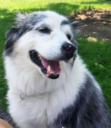 Smiling dog outside sitting on the grass
