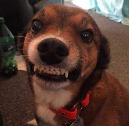 funny smiling dog reece