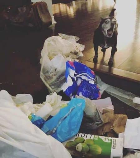 crazy dog pictures of a Pooch with a funny expression in-front of a trash pile
