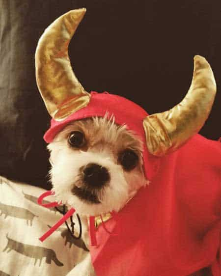 Howloween viking costume for Dogs in Funny Dog Halloween Costumes
