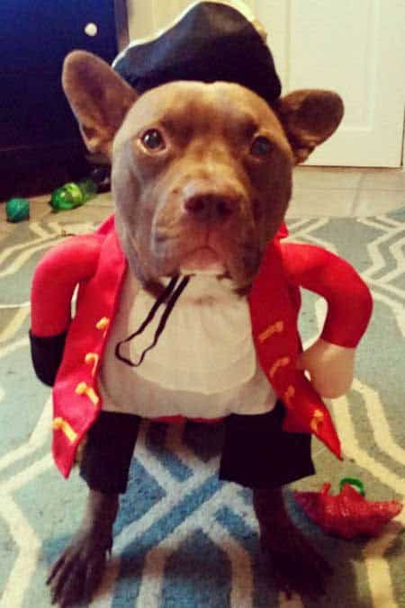 Howloween colonial costume for Dogs