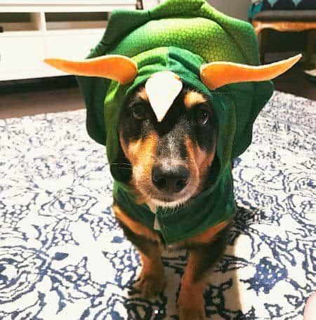 Howloween dinosaur costume for Dogs