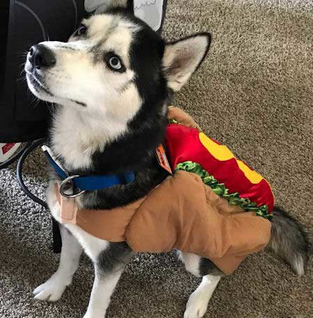 Husky Halloween costume