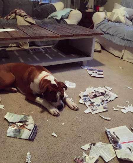 canine chills in the paper mess they created
