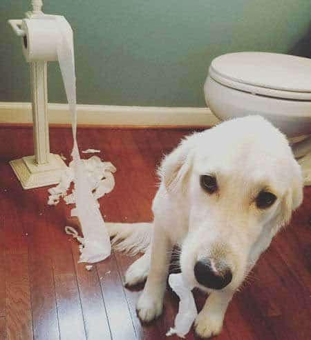 Crazy Dog with a funny expression shreds the toilet paper