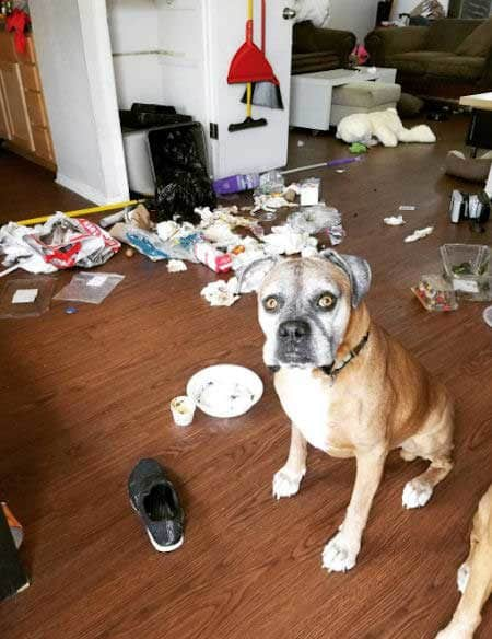 Crazy Dog destroys the trash and spreads it all over the place