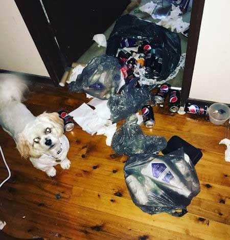 Crazy Dog takes the garbage apart