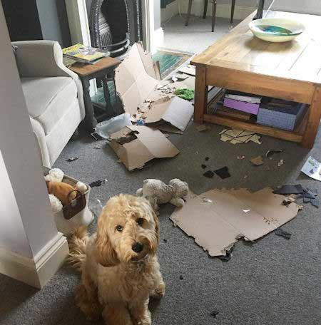 Crazy Dog standing over the mess they created with cardboard