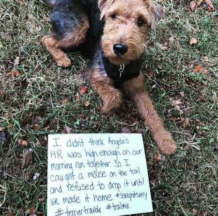 Small dog participating in dogshaming pictures for grabbing a mouse.