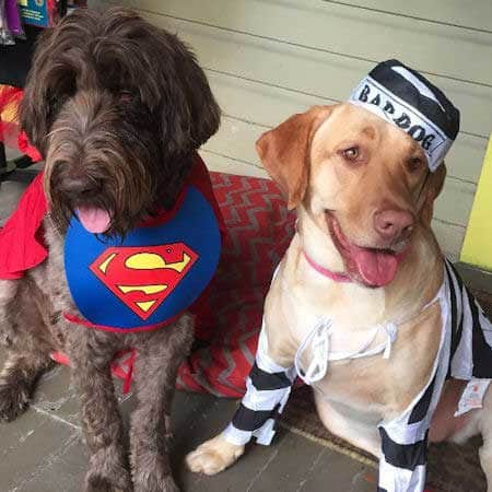 Dog Halloween Costumes with a funny dog dressed up for Halloween