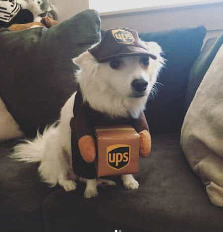 Dog Halloween Costumes with a Cute Dog in a UPS Halloween costume