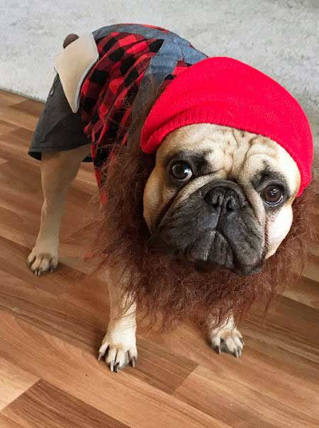 Awesome canine in a dog Halloween costume lumberjack