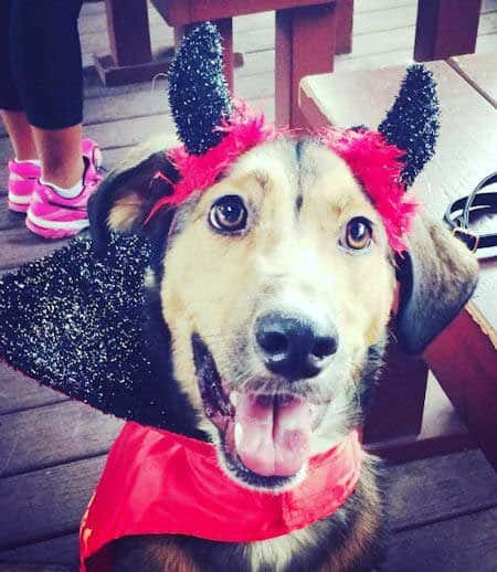 Cute funny canine in a dog Halloween costume the devil