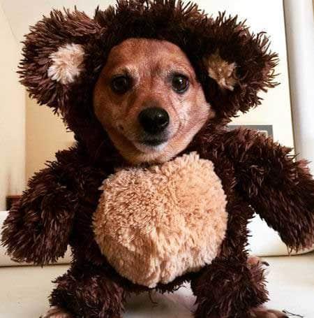Halloween Dog Costume teddy bear