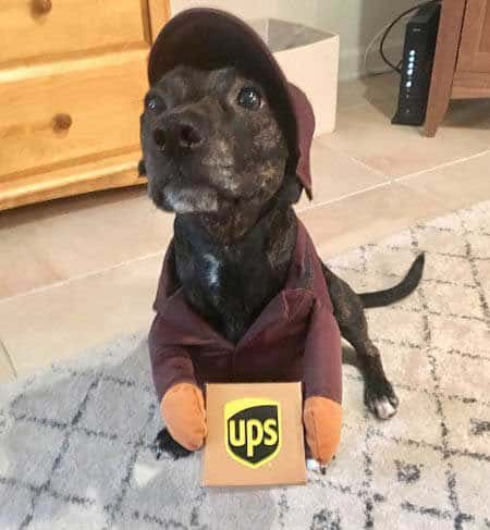 Halloween Dog Costume UPS Delivery