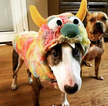 funny dogs dressed in costumes with a Costume of a wacky monster