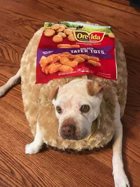 Dog named potato dressed up as a tater tot