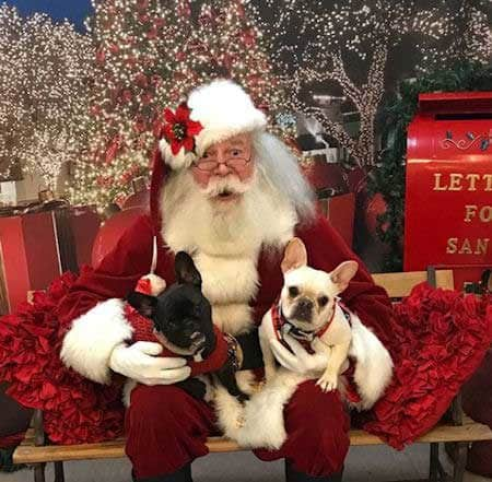 2 funny Dogs sitting with Santa Claus
