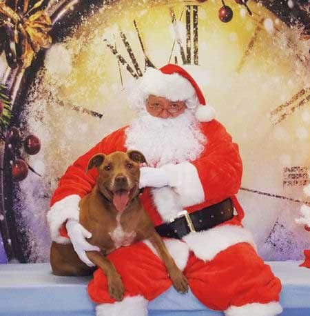 Christmas Dog Pictures with Santa in front of a clock