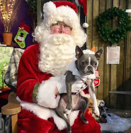 Christmas Dog Pictures with Santa