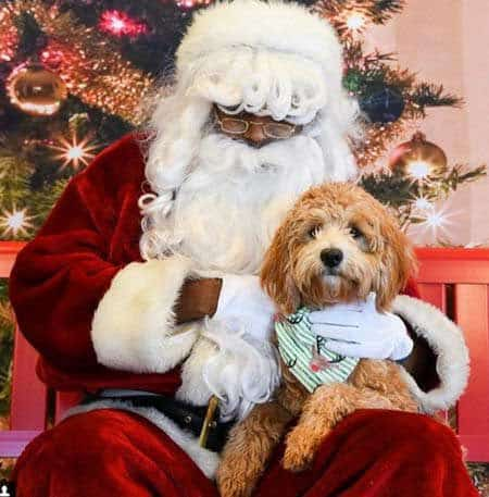 Santa Claus picture with cut dog on his lap