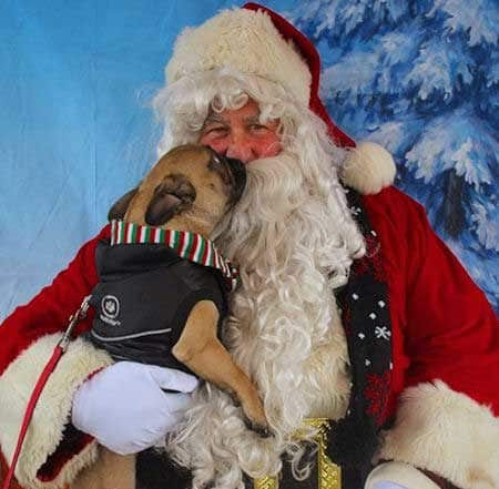 Sweet picture of a dog kissing Santa