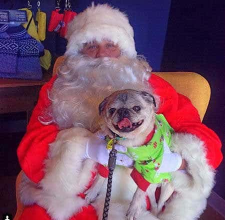 Cool looking Santa with a dog on his lap