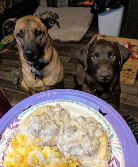 two funny begging dogs asking for breakfast