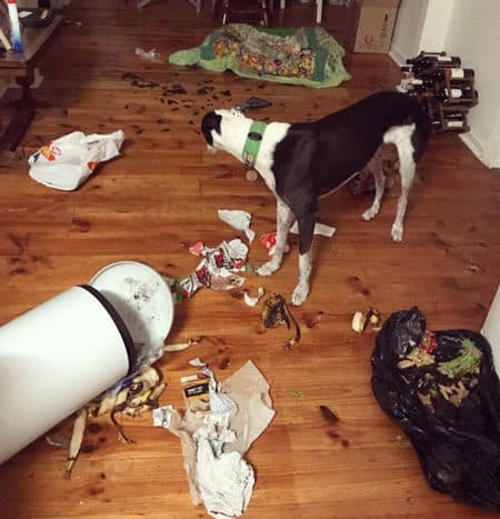 greyhound dumped over the trashcan and spread the mess all over the place