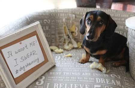 dog denying the destructive deed