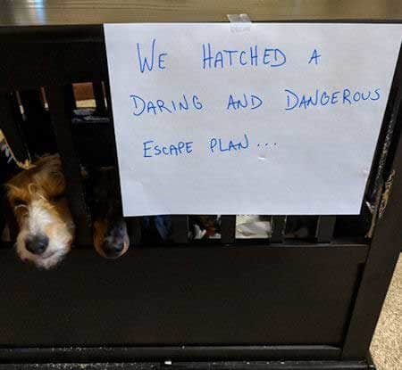 Funny dogs shamed for trying to escape