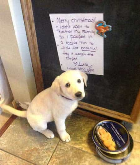 Christmas Dog Shaming puppy poops in cookie tin