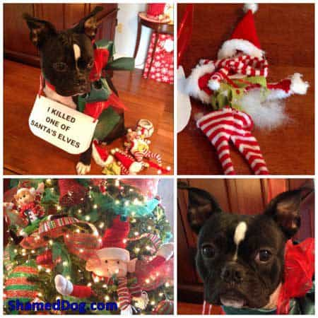 Christmas Dog Shaming pooch kills an elf
