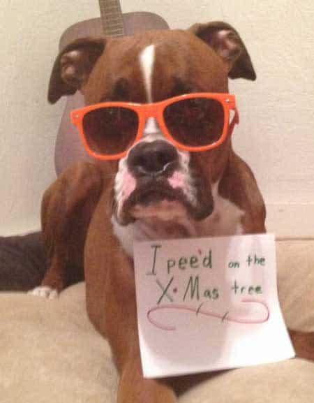 Christmas Dog Shaming Canine pees on Christmas tree