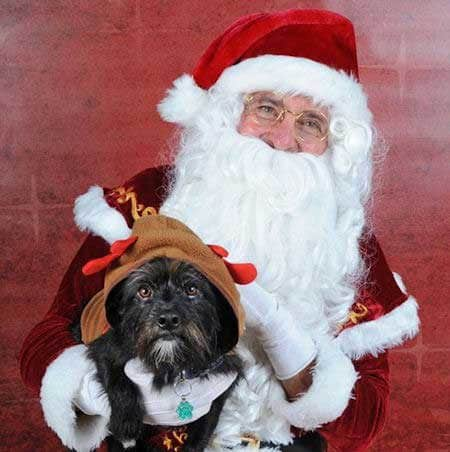 Santa Paws pictures dog dressed as reindeer with Santa Claus
