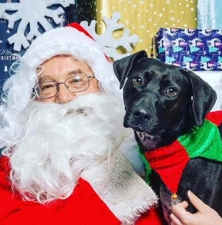 Santa Paws pictures black dog with Santa Claus