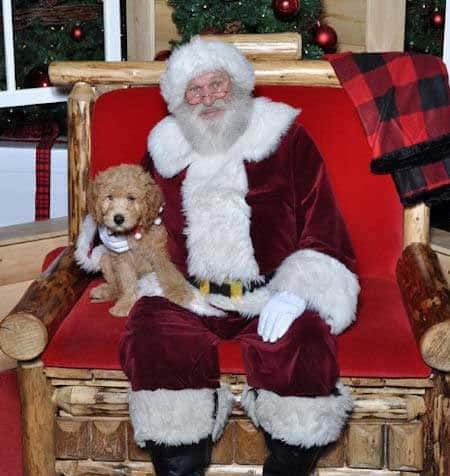 Santa Paws pictures small dog with Santa Claus on a red wood chair