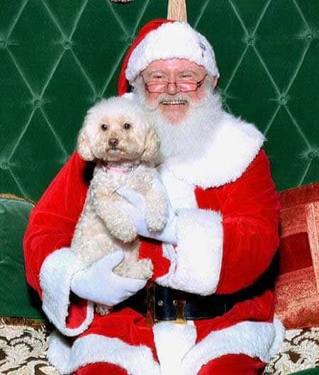 Santa Paws pictures little cute dog with smiling Santa Claus